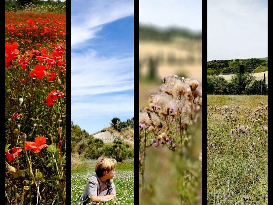 Glamping in Toscana visitando Assisi, Pienza, Bagno Vignoni e le Terme libere di Bagni San Filippo