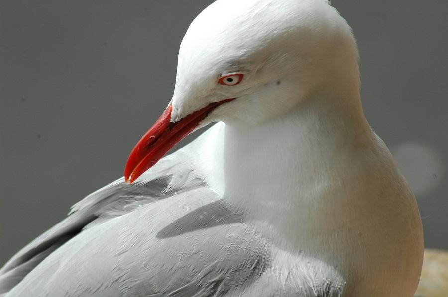 nuova-zelanda (12)