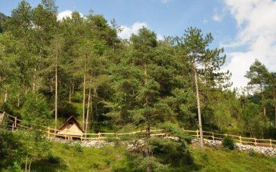 Case sull'albero in Italia: dove sono e quanto costano!